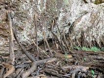 Träpinnar som stöttar det stort, vaggar, staplat trä rymma berget på vattenfallet royaltyfri foto