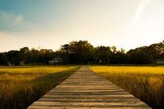 Träpir i träsk South Carolina för lågt land på solnedgången med grönt gräs Fotografering för Bildbyråer