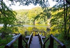 Träpir på en sjö i skog Royaltyfria Bilder