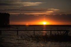 Träpir på solnedgången Arkivfoto