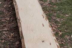 Träplankan av sörjer utan peelen, innan den sliter på process Royaltyfria Foton