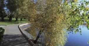 Träplattform på kusten av dammet stock video