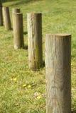 träpoler Arkivbild