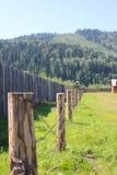 Träpoler med taggtråd i skogen royaltyfria bilder