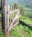 Träportöppning på telantgård Royaltyfri Bild