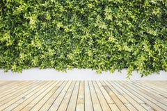 Träpryda eller däcka och växt i trädgårds- dekorativt Royaltyfria Foton
