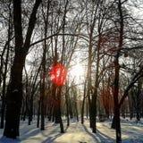 träräknad felik vinter för saga för skoghussnow Royaltyfri Bild