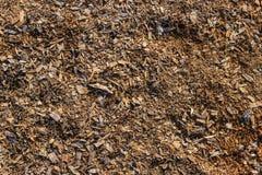 Träsågspånbakgrund Royaltyfri Foto