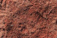 Träsågspånbakgrund Royaltyfria Bilder