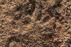 Träsågspånbakgrund Royaltyfria Foton