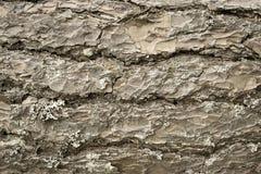 Träskäll för abstrakt textur av en beige färg för sörja Royaltyfri Bild