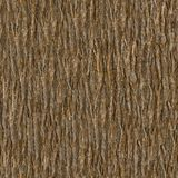 Träskäll Seamless Tileable texturerar Arkivfoto