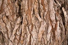 Träskällbakgrund Fotografering för Bildbyråer