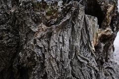 Träskällbakgrund Det gammala Treeskället texturerar Arkivfoto