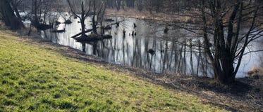 Träsk i höst Kall mörk sjö i kallt melankoliskt landskap för urtids- skog Royaltyfria Foton