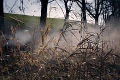 Träsk i höst Kall mörk sjö i urtids- skog Arkivfoto