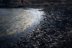 Träsk i höst Kall mörk sjö i urtids- skog Royaltyfria Foton