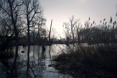 Träsk i höst Kall mörk sjö i urtids- skog Royaltyfri Foto