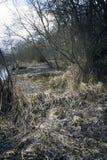 Träsk i höst Kall mörk sjö i urtids- skog Arkivbilder