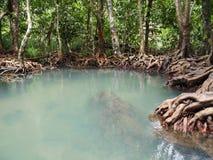 träsk i mangroveskogen arkivfoton