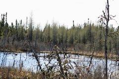 Träsk i norr Saskatchewan Arkivfoto