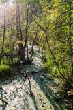 Träsk i skogen Arkivfoto