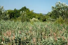 Träsk och dess växter bredvid skogen som omges av berg royaltyfria foton