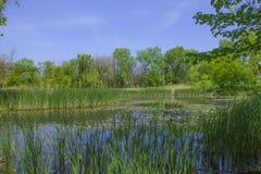 Träsk och gräs för NPV-naturmitt arkivbild
