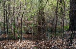 Träsk och träsk i en djup skog arkivfoton
