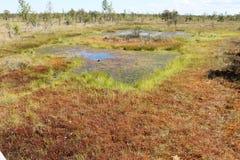 Träsk på den Kemeri nationalparken, Lettland Arkivbilder