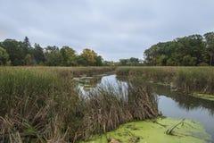 Träsk som leder till Minnetonka sjön Royaltyfri Foto
