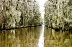 Träsk, spansk mossa och flodarm på Caddo sjön i östliga Texas Royaltyfri Bild