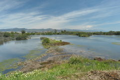 Träsk våtmarker på kusten Royaltyfri Fotografi