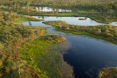 Träsket björkar, sörjer och blått vatten Aftonsolljus i myr Reflexion av träskträd Kärr sjöar, skog arkivbild