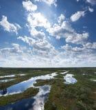 Träsket björkar, sörjer och blått vatten Aftonsolljus i myr Reflexion av träskträd Kärr sjöar, skoghed i sommar arkivbilder