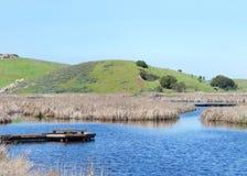Träskland med den fulla sjön på prärievargkullar royaltyfria bilder