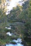 Träskplats med träd och vatten Royaltyfria Foton