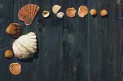 Träskrivbord med havsskal Fotografering för Bildbyråer