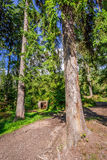 Träskydd i bergskogen Royaltyfri Foto