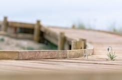 Träslinga som leder till stranden i regnigt väder Royaltyfri Fotografi