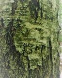 Träsnidaren är naturen själv, drar ruskiga framsidor av monster Arkivbild