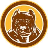 Träsnitt för cirkel för huvud för Pitbull hundbyracka Arkivbilder