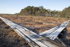 Träspång i träsket, tidig vår arkivfoton