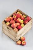 Träspjällåda med äpplen Royaltyfri Bild