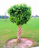 Trästaket av en växt Fotografering för Bildbyråer