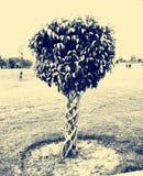 Trästaket av en växt Royaltyfri Bild