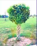 Trästaket av en växt Royaltyfri Fotografi