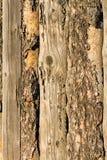 Trästaket av vertikala plankor Fotografering för Bildbyråer