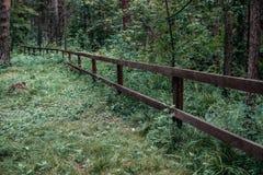 Trästaket i frodig grönska i nationalparken Arkivfoto