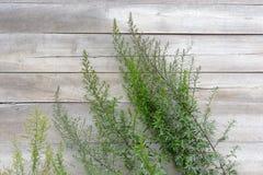 Trästaket med den gröna växten Royaltyfria Bilder